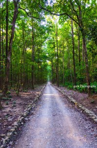road in jim corbett safari