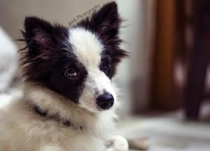 cute pet dog